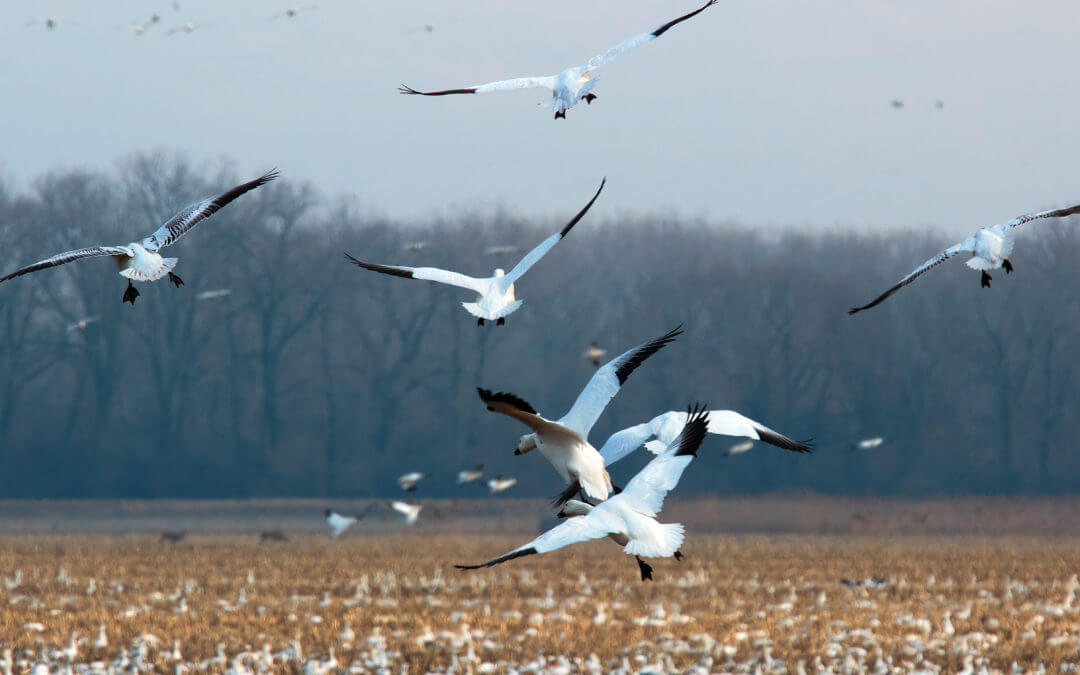 Birders — Spring Migration Underway