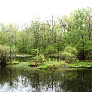 Wetlands Mapping Project
